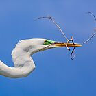 Great Egret Flying with Twig by Kenneth Keifer