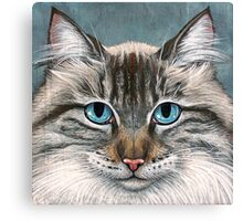 Blue Eyed Maine Coon, painting Canvas Print
