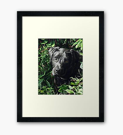 Cute Black Lab puppy, painting Framed Print