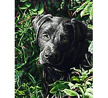 Cute Black Lab puppy, painting Photographic Print