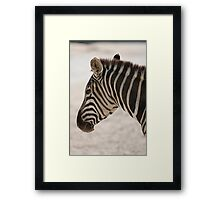 zebra at the zoo Framed Print