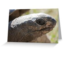 tortoise at zoo Greeting Card