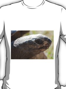 tortoise at zoo T-Shirt