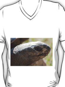 tortoise at zoo T-Shirt