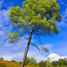 Pine Tree by jean-louis bouzou