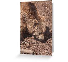 bear in the zoo Greeting Card