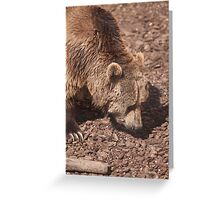 bear in the zoo Greeting Card
