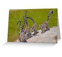 lemur at the zoo Greeting Card