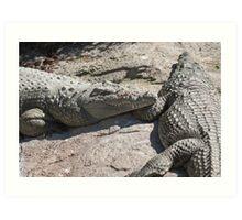 crocodile at the zoo Art Print