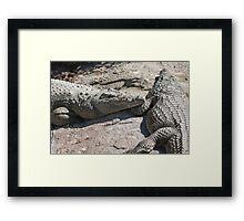 crocodile at the zoo Framed Print
