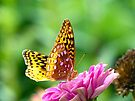 Great Spangled Fritillary by Susan S. Kline