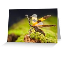 Reticulated Netwinged Beetle Greeting Card