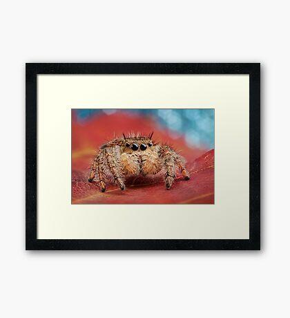Arachnid Red Bokeh Blue Framed Print
