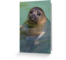sea ​​lion at the zoo Greeting Card