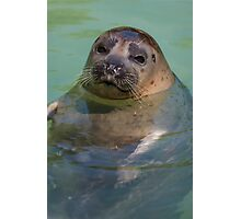 sea lion at the zoo Photographic Print