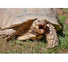 tortoise at zoo Photographic Print