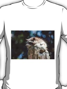 raccoon T-Shirt