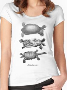 John Laurens Turtle Sketches Women's Fitted Scoop T-Shirt