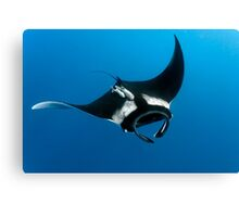 On Silent Wings Canvas Print