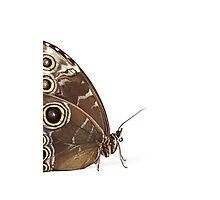 Owl Eye Butterfly Macro Photographic Print