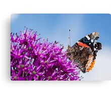 Red Admiral Butterfly on Allium Flower Canvas Print