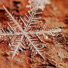 Snowflake on Mars 1 by Dan Dexter