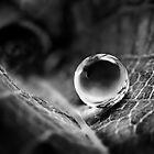 Perfect Water Sphere by Dan Dexter