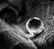 Perfect Water Sphere by Dan Dexter