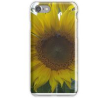 Single Sunflower  iPhone Case/Skin