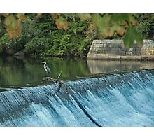 Heron Looking towards the Future Photographic Print