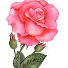 Pink Rose by Farida Greenfield