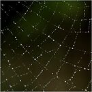 Spider Web by JeniNagy