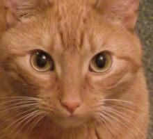 Eyes of a cat Sticker