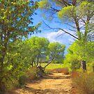 Garrigue Trail by jean-louis bouzou