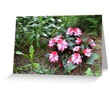 Pink Flower II Greeting Card