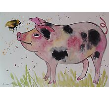 Spotty Pig and a Bumble  Photographic Print