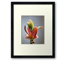 Budding Maple - Memories of Spring Framed Print