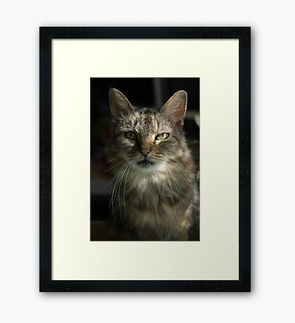 Green Eyes in Sunlight Framed Print