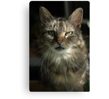 Green Eyes in Sunlight Canvas Print