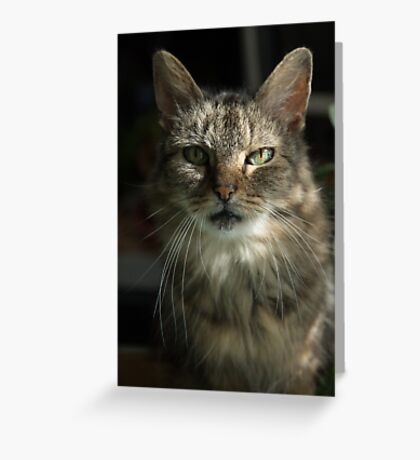 Green Eyes in Sunlight Greeting Card