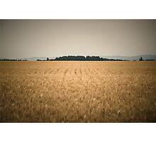 Oregon Field Photographic Print