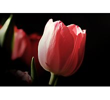 Tribute to PINK Photographic Print