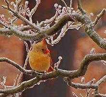 Icy Perch by Mary Carol Story
