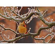 Icy Perch Photographic Print