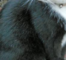 A Cat and a Car Sticker