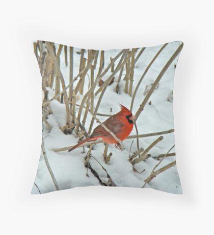 Northern Cardinal (Cardinalis cardinalis) Songbird Throw Pillow