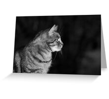 Poppy at night Greeting Card