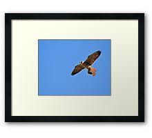 Greater Kestrel - Macky's African Wings Framed Print