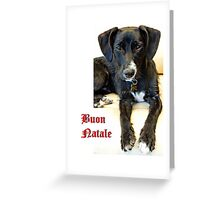 Buon Natale Cane Greeting Card