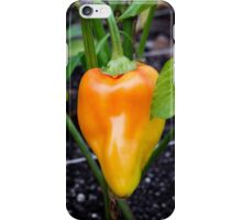 Gypsy Pepper iPhone Case/Skin